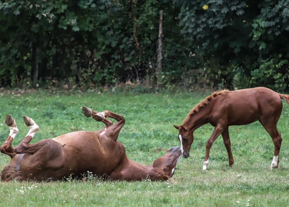 caballos finca granja animales afp.jpg