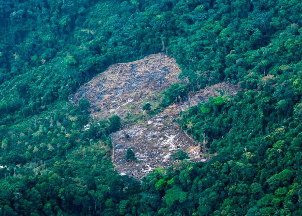 357072_Deforestación en la Amazonía