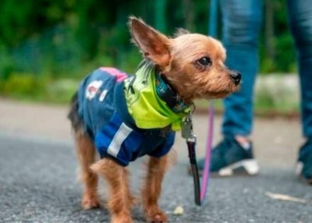 Patrulla canina Japon Foto AFP.