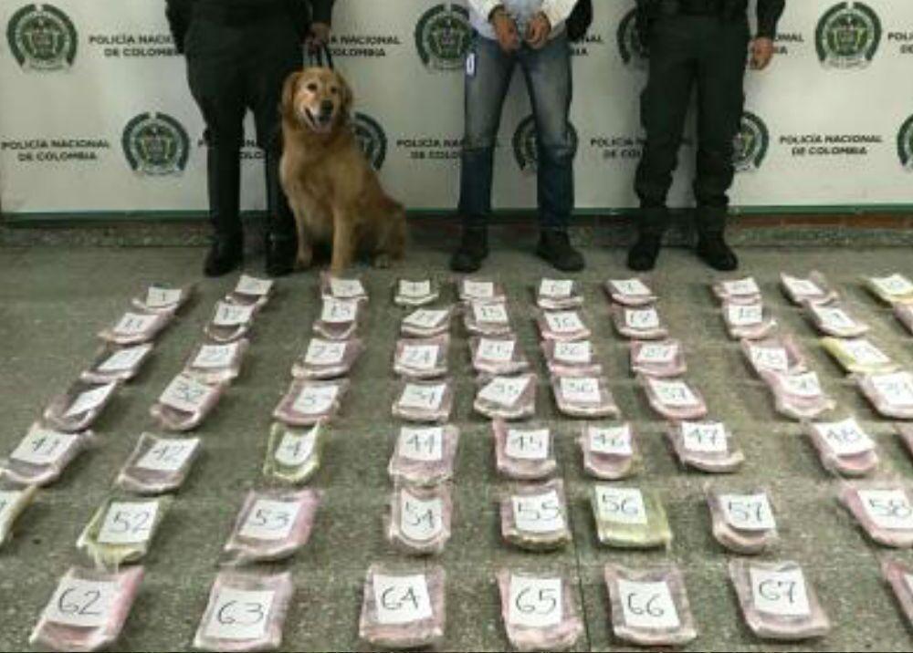 335827_Foto: Policía canino antidrogas de Bogotá - referencia