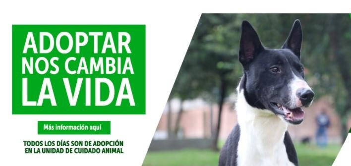 adopción Instituto de protección y bienestar animal .jpg
