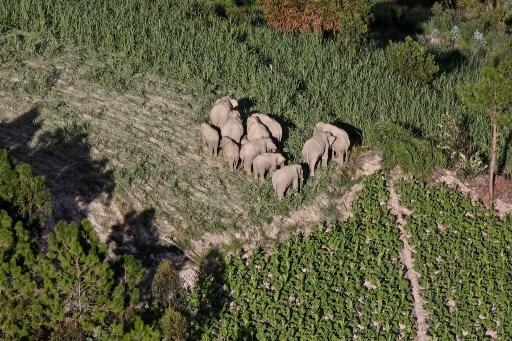 elefantes China
