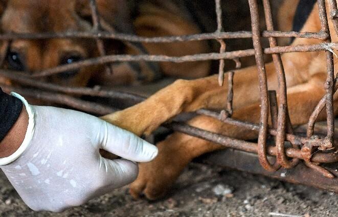 maltrato perros generica_afp.jpg