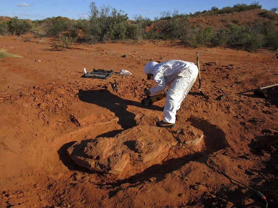 326799_Foto: Blu Radio - Dinosaurio / AFP