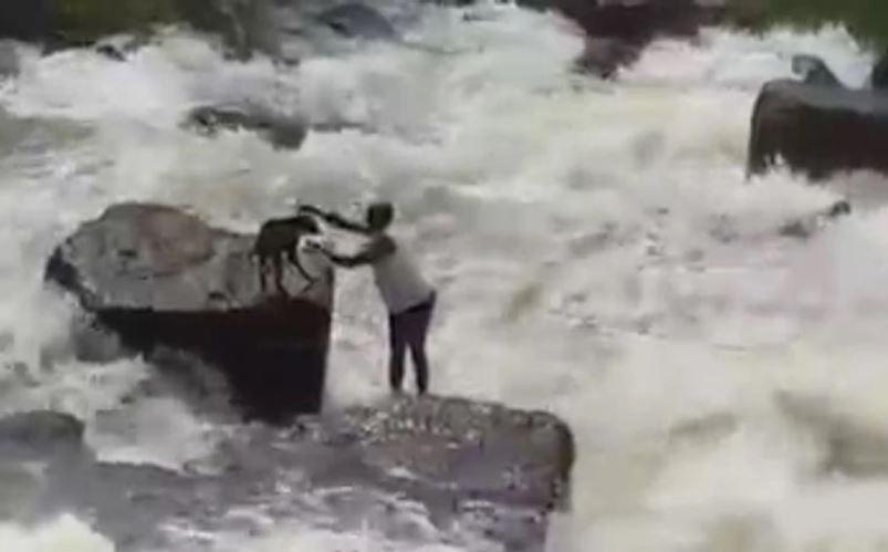 hombre arriesgó su vida por salvar a un perrito.JPG