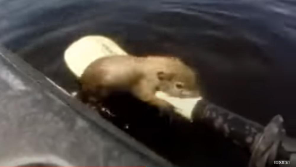 Hombre salvó a una ardilla de morir ahogada - Captura sacada de YouTube.PNG