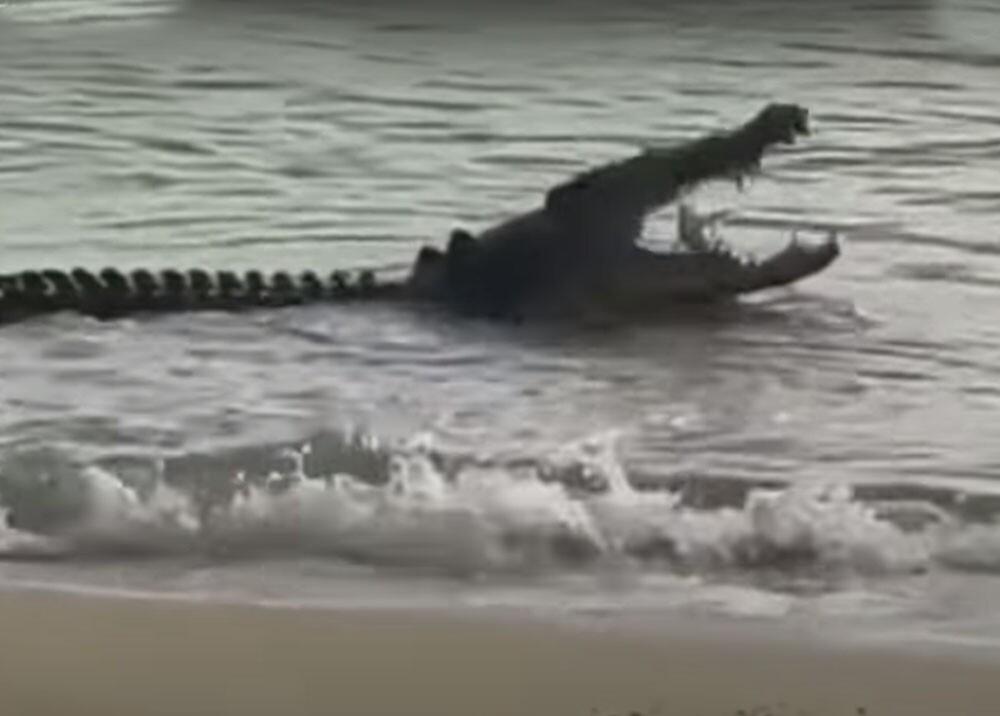 cocodrilo que se comio dos tiburones.jpg