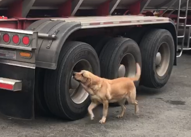 perro policia del valle del cauca detecta balas de fusil transportadas en un camion.png
