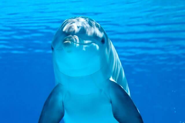 delfin-nota.jpg