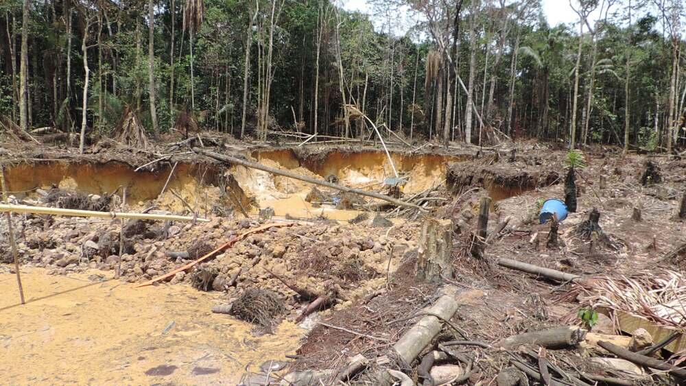 Congreso endureció penas contra personas que cometen delitos ambientales.jpg
