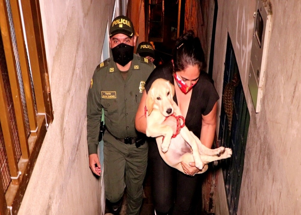 367254_BLU Radio. Rescate mascota robada / Foto: Policía Bucaramanga