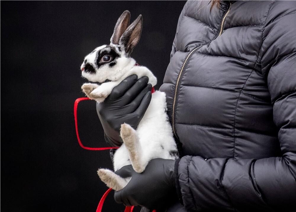 369918_Pruebas en animales / Foto: Referencia AFP