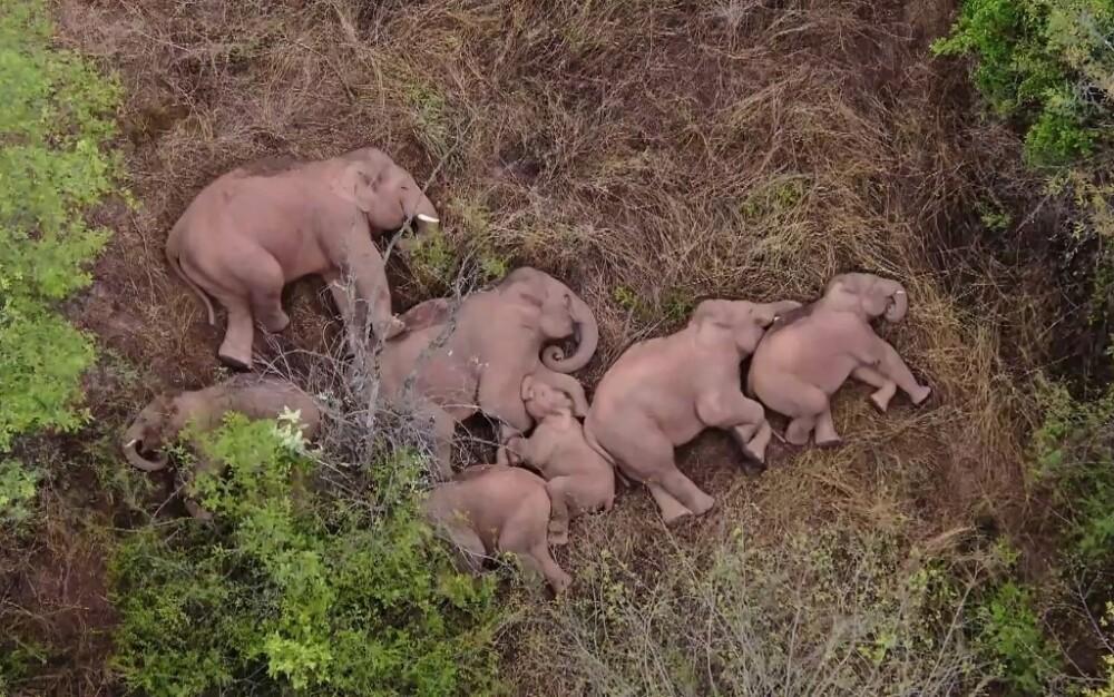 Elefantes toman siesta en China