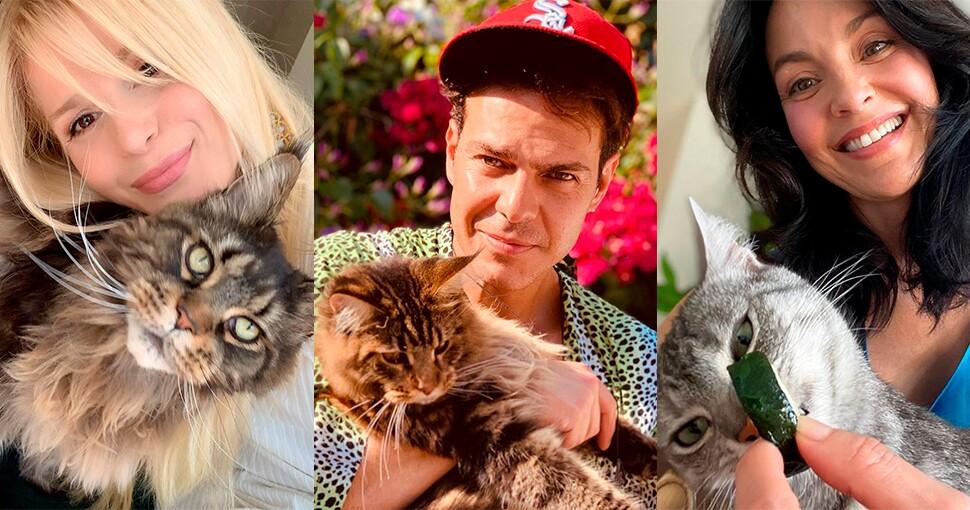 Gatos de los famosos