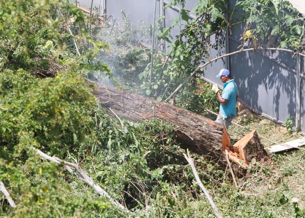 332284_BLU Radio // Talan árboles en Bucaramanga cerca de quebrada // Foto: BLU Radio
