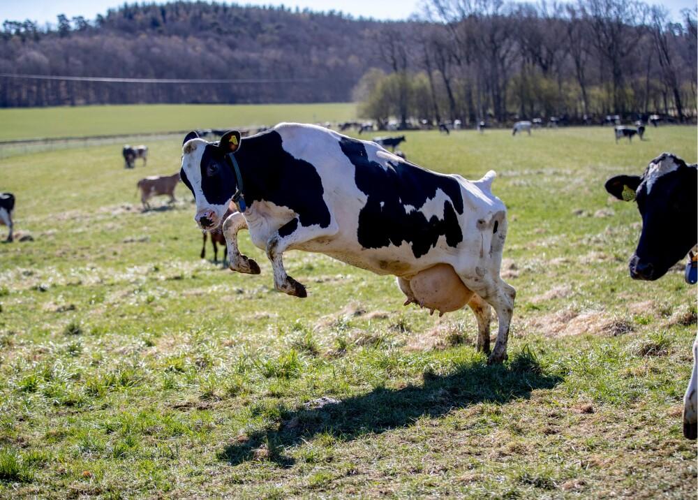 Animales de granja referencia Foto AFP.jpg