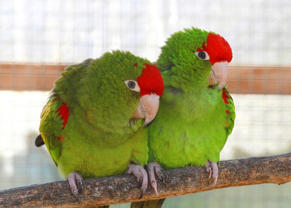 25442_Loros groseros fueron Castigados en un zoológico - Foto referencia Freepik