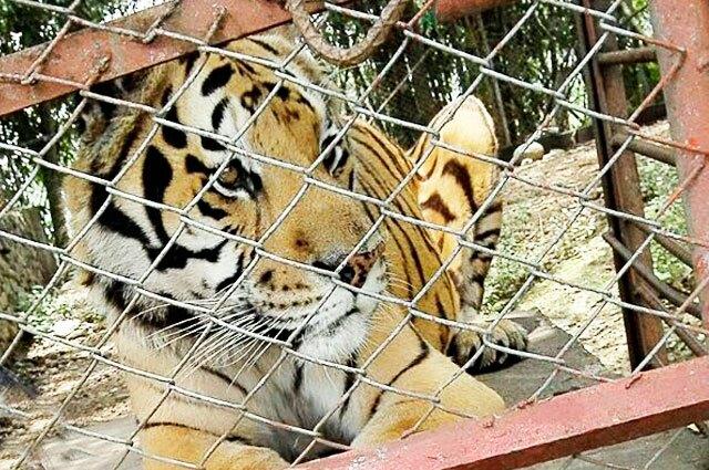 tigre-villa-lorena.jpg
