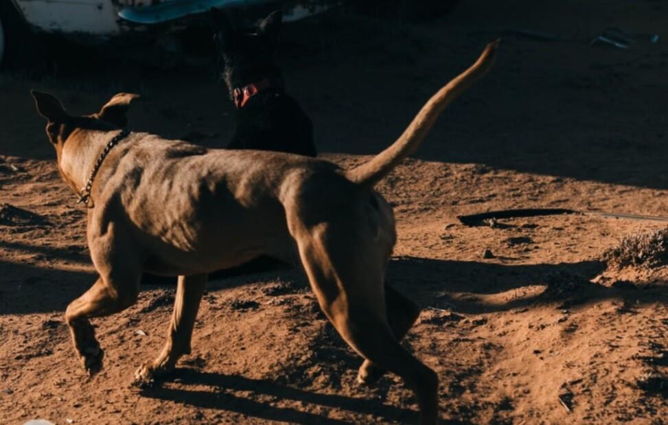 Ataque de perros.jpg