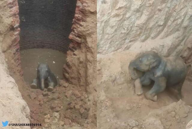 elefante sobrevive