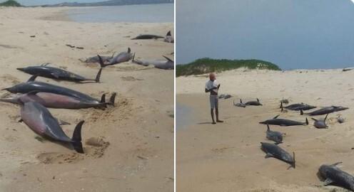 delfines mozambique.jpg