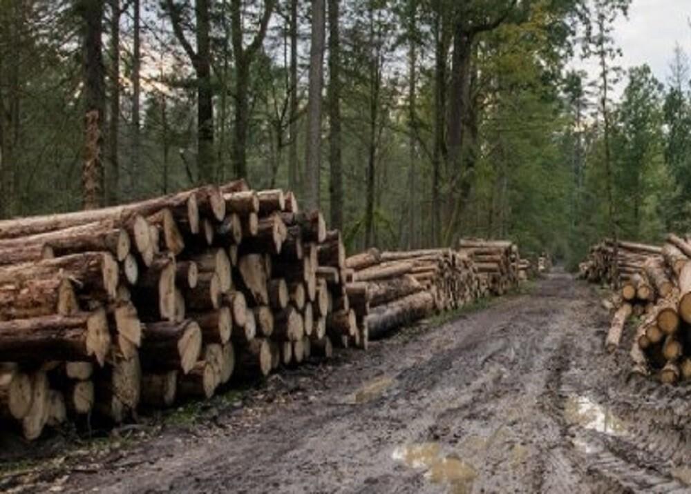308762_BLU Radio. Deforestación, referencia / Foto: AFP.