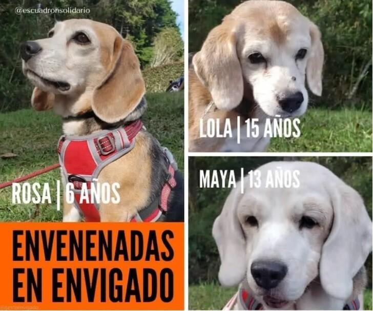 Perros envenenados.jpg