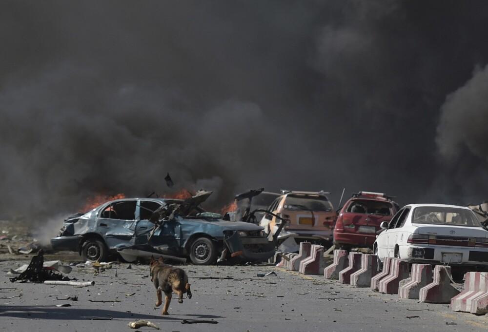 Perros en Afganistán