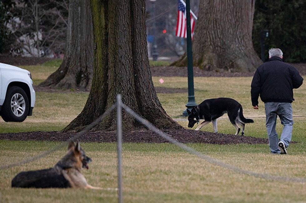Perros de Joe Biden