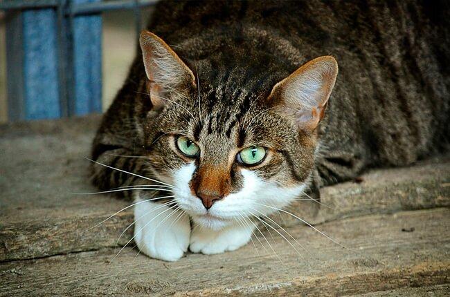 catsy.jpg