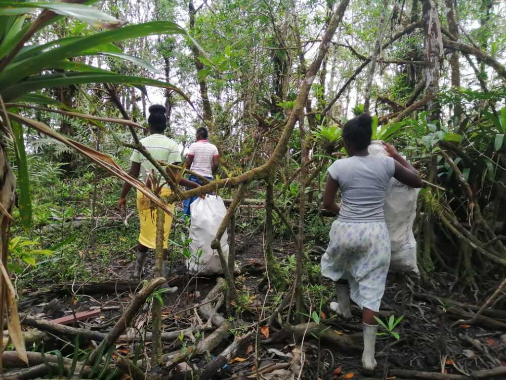 limpieza en los puertos y manglares de buenaventura  (2).jpeg