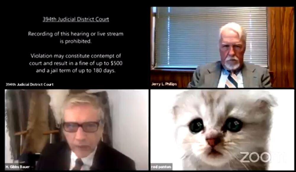 Abogado activó, por error, tierno filtro de un gato en plena audiencia.JPG