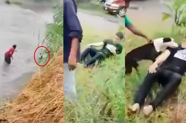 rescate de perrito que cayo al rio