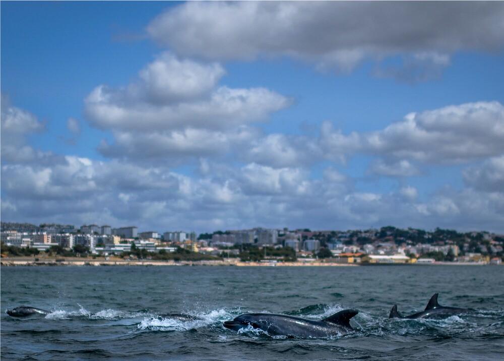 Delfines_Foto_referencia AFP.jpg