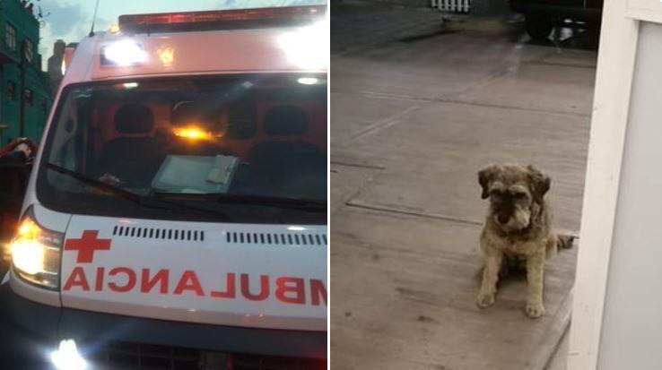 perro Juan persigue ambulancia en la que llevan a su dueño en mexico