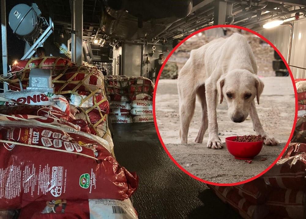 donacion de alimento para animales en san andres.jpg