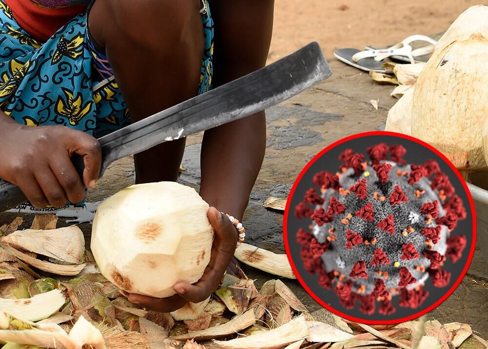 Investigan efectividad del aceite de coco para destruir virus del COVID-19
