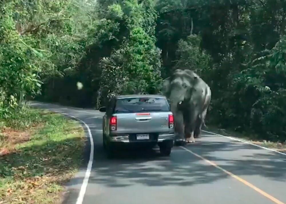347233_BLU Radio. Elefante por poco aplasta carro con a turistas / Foto: Parque Nacional de Tailandia