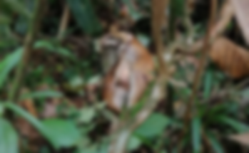 casi jaguar.png
