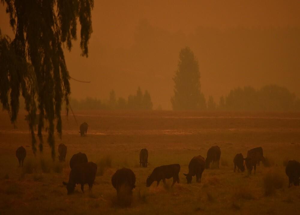 372423_Australia incendio. Foto: AFP