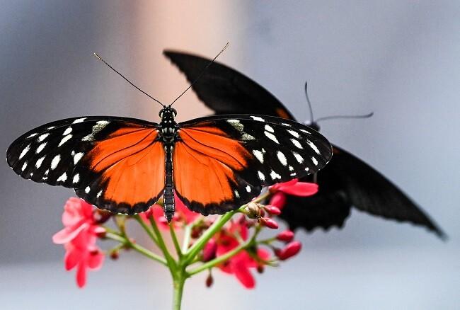 mama se aparecio en forma de mariposa