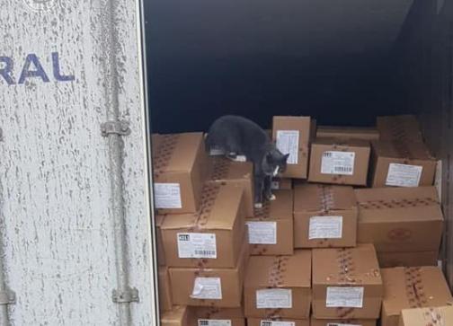 Gato sobrevivió 3 semanas en un contenedor.PNG