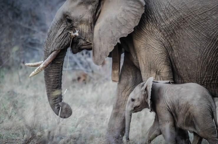 Hombre es arrestado al ingresar con su hija a un recinto de elefantes