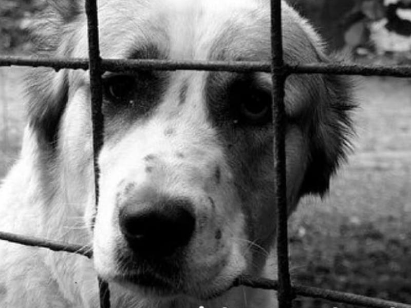 caso de maltrato animal en El Santuario Antioquia