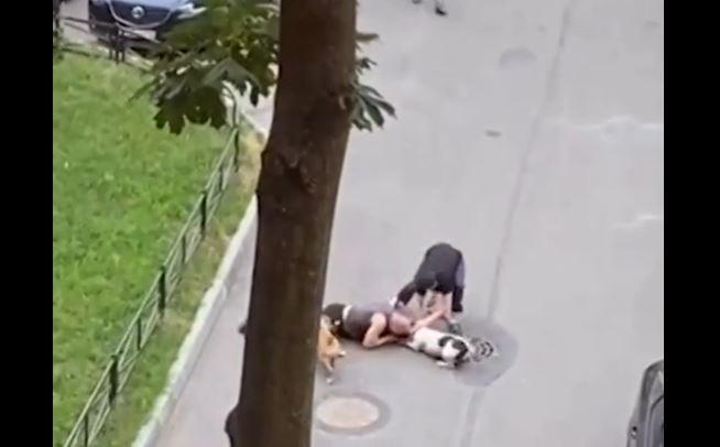 Abrazó a su perro para protegerlo de mordidas de otros dos caninos