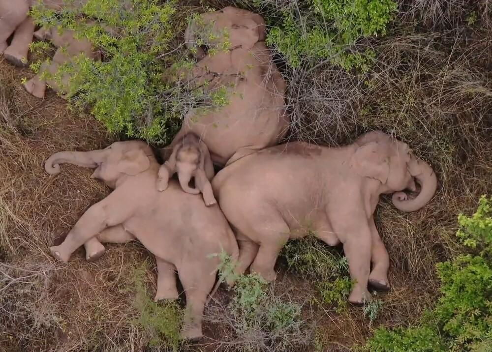 Elefantes en China Foto AFP.jpg