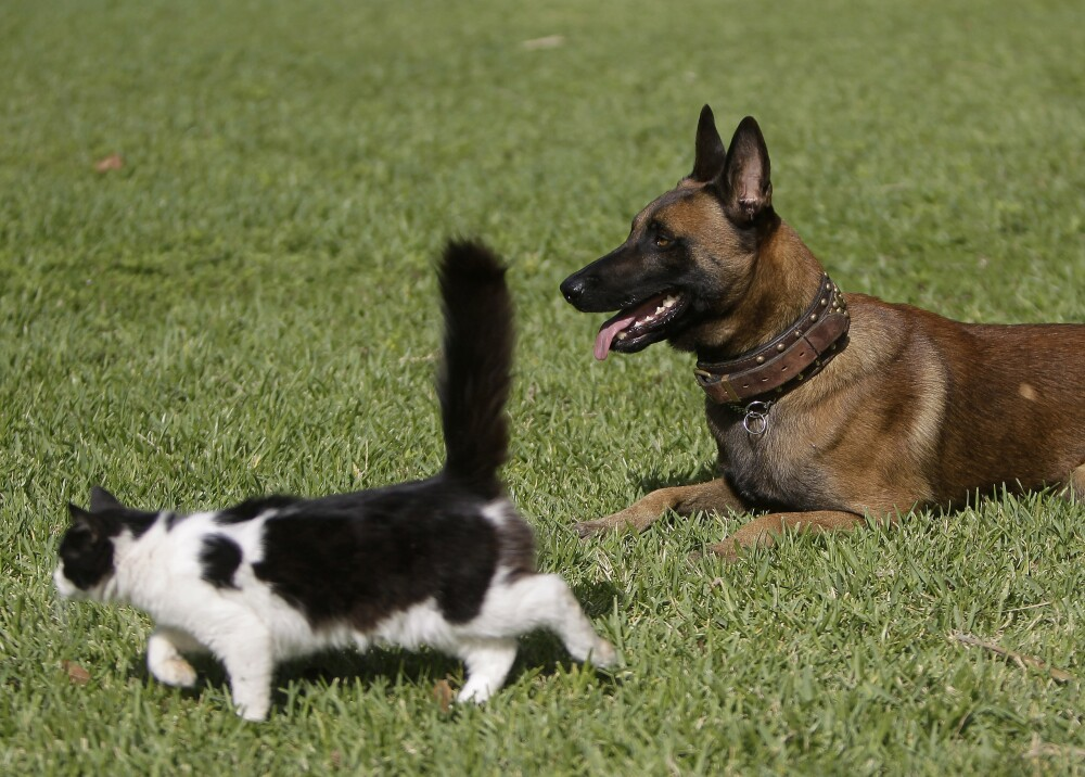 Perros y gatos animales mascotas afp.jpg