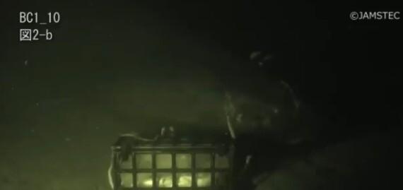Tiburón dormilón