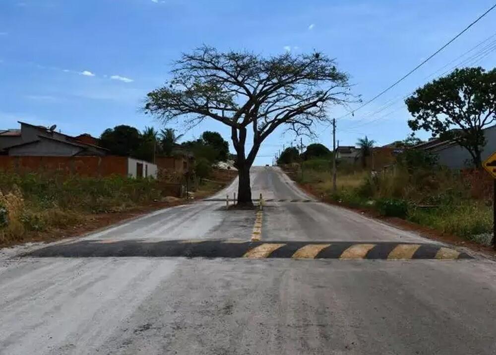 371455_Árbol en avenida de Brasil // Foto: Prefeitura de Paraíso do Tocantins/Divulgação
