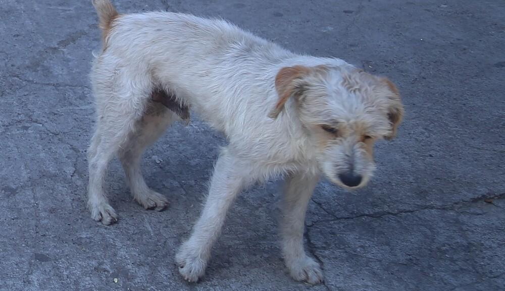 Asistencia alimentaria a perros callejeros